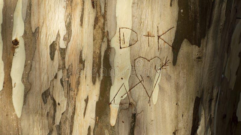 Początkowi kochankowie pisać w drzewnym bagażniku, eukaliptusowy bagażnik ilustracja wektor