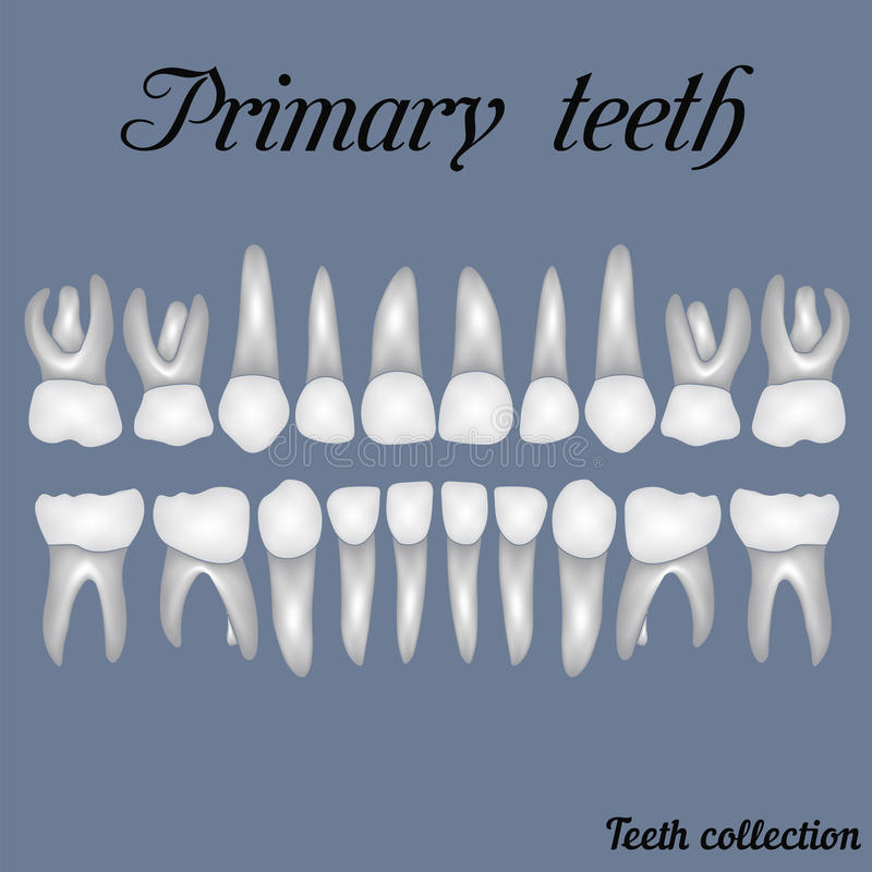 Początkowi zęby ilustracja wektor