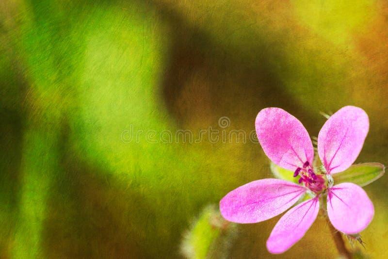 Pocztówki stylowy tło z menchia kwiatem zdjęcie stock