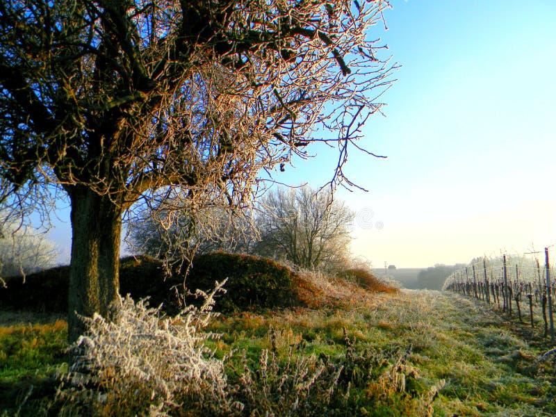 Podąża drzewa zdjęcie royalty free