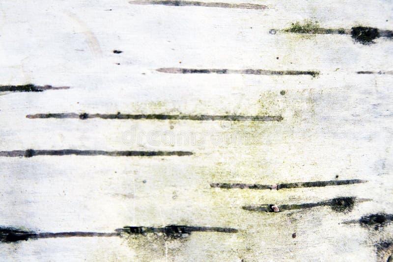 Podława szorstka brzozy barkentyny czarny i biały tekstura zdjęcia stock
