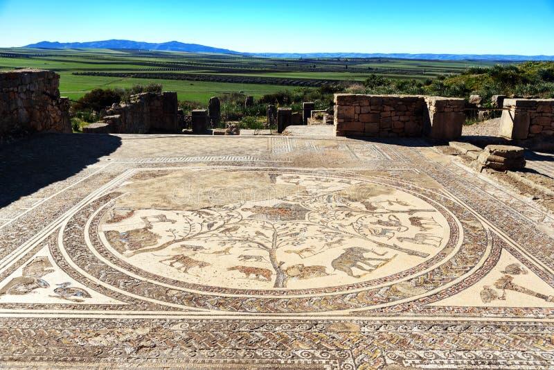 Podłogowa mozaika w Orpfeus domu w Romańskich ruinach, antyczny Romański miasto Volubilis Maroko obrazy stock