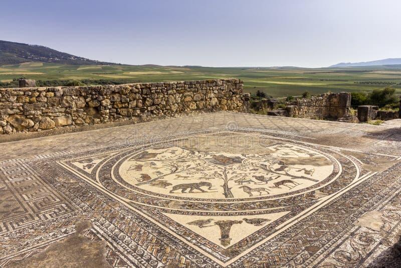 Podłogowa mozaika w Orpheus domu przy archeologicznym miejscem Volubilis fotografia royalty free