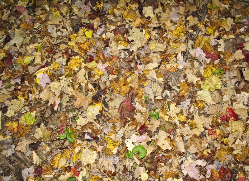 podłogowy jesień las fotografia royalty free