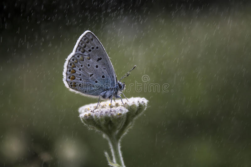 Pod deszczem obraz stock