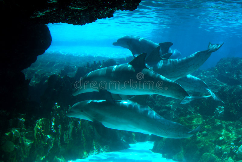 Pod of Dolphins stock photo