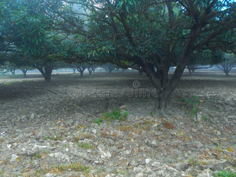 Pod drzewami fotografia stock