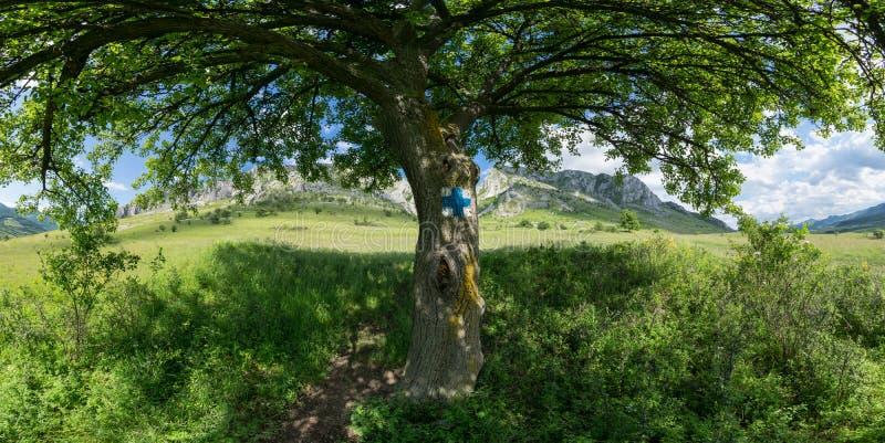 Pod drzewnym cieniem obraz stock