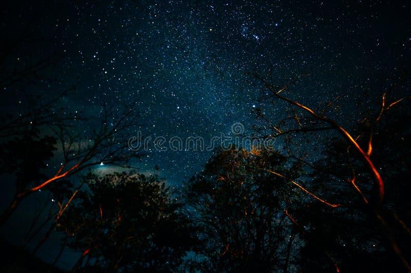 pod drzewnym nighttime nieba gwiazdy tłem zdjęcia royalty free