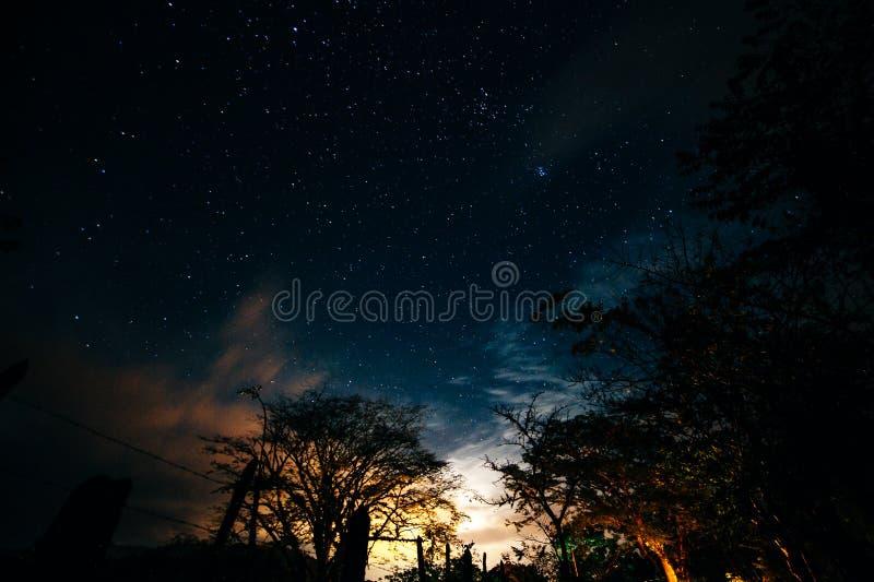 pod drzewnym nighttime nieba gwiazdy tłem obraz stock