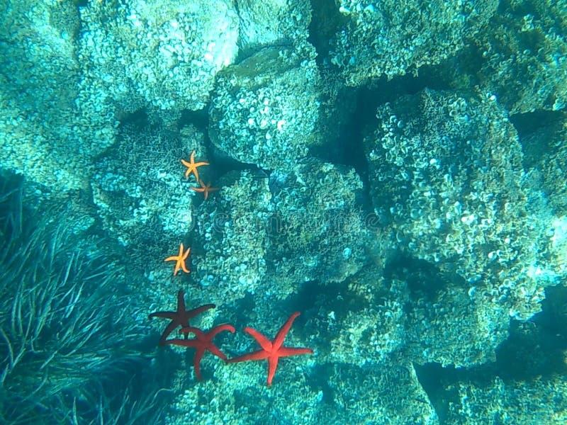 Pod morzem zdjęcie royalty free