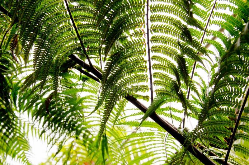 Pod paprociową liść pokrywą słoneczna zieleń znaczy wilgoć w atmosferze w Tajlandia fotografia royalty free