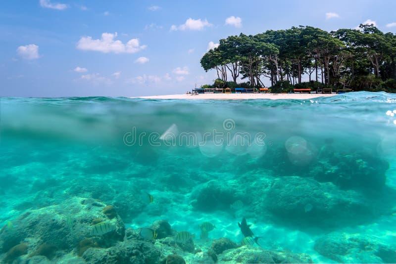 Pod widokiem tropikalna plaża z luksusowym tropikalnym drzewem zdjęcia royalty free