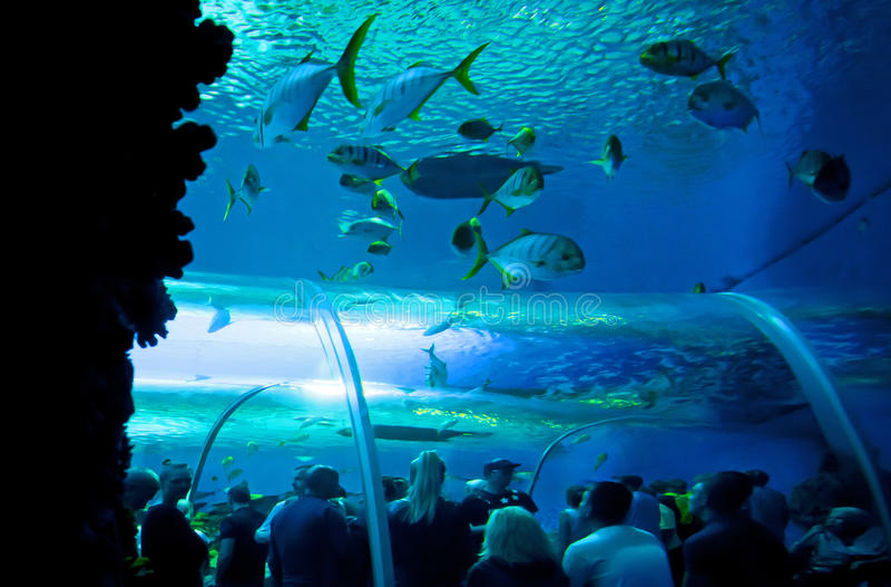 pod wodnym światem zdjęcia royalty free