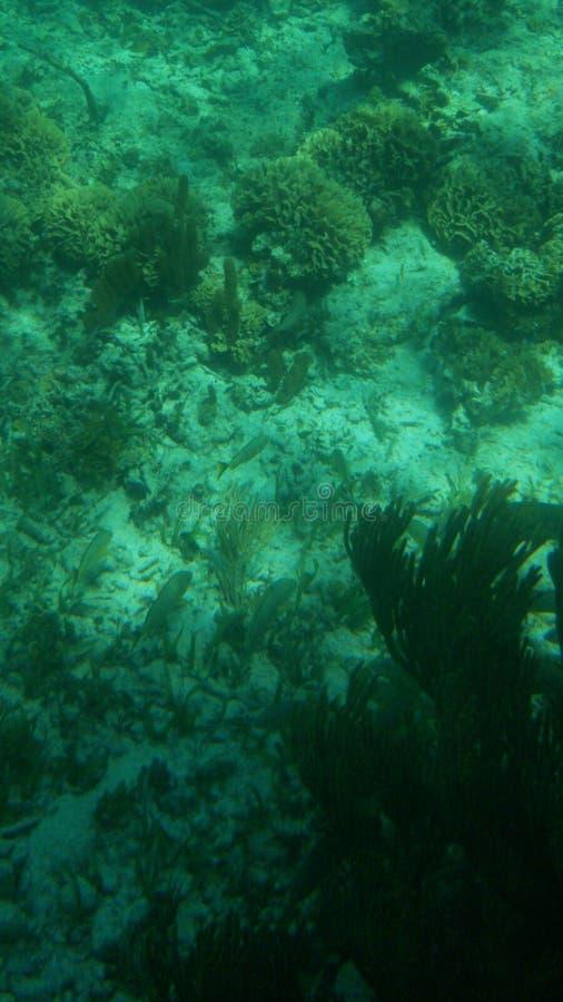 Pod wodnym Marina życiem zdjęcie stock
