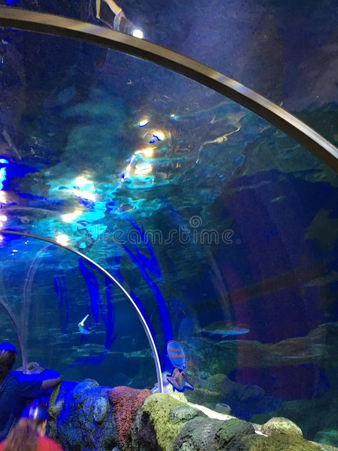 Pod wodnym tunelem obraz royalty free