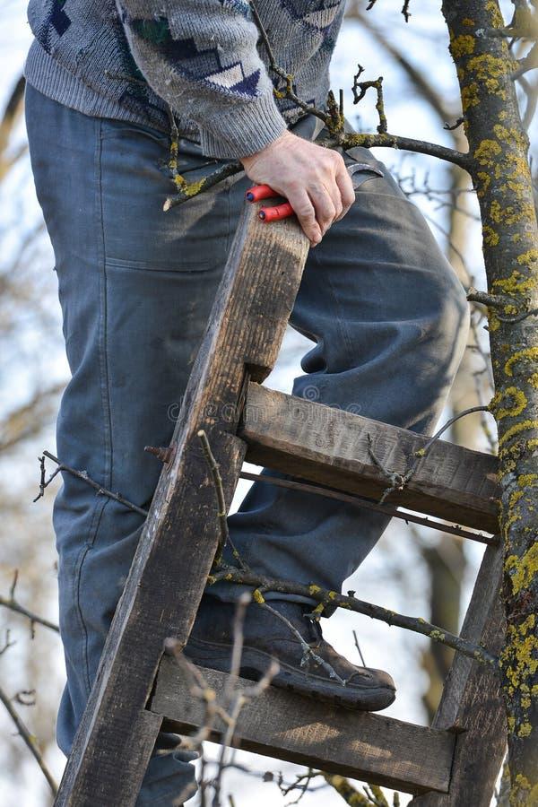 Poda de árboles con las tijeras de podar en el jardín imagen de archivo libre de regalías