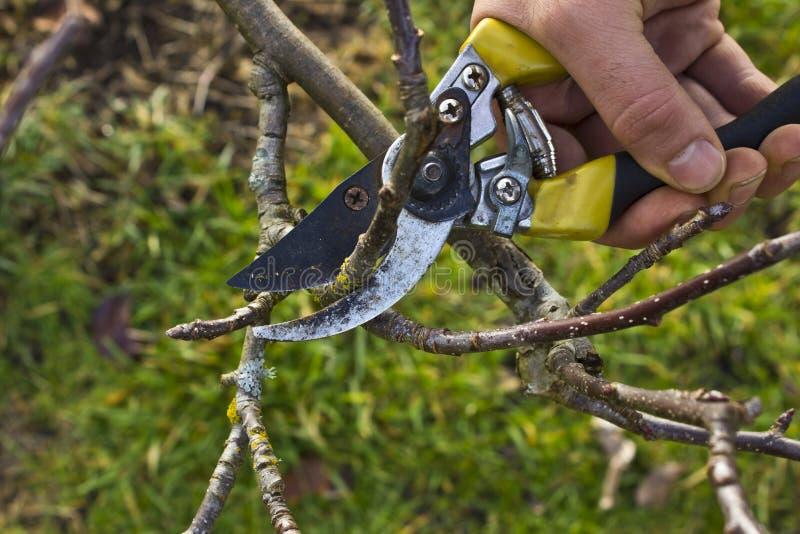 Poda del árbol foto de archivo libre de regalías