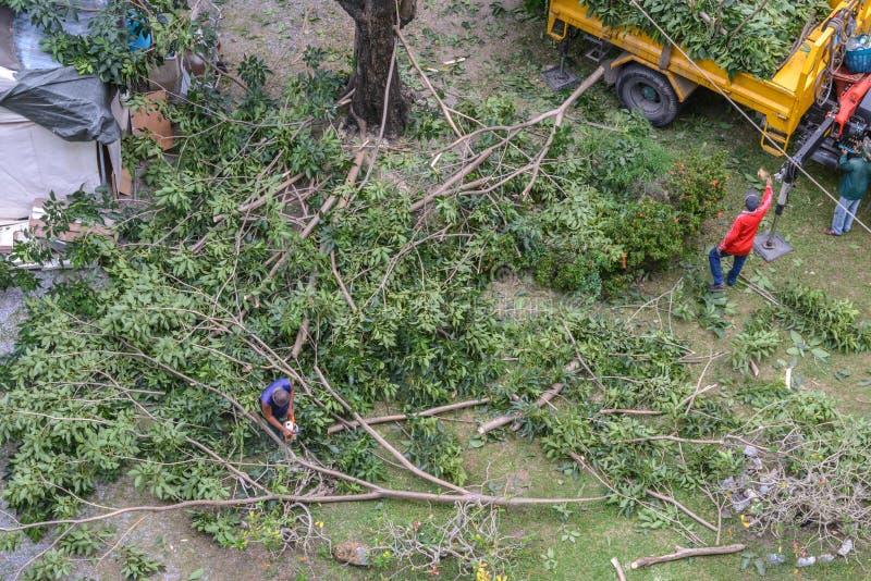 Poda del jardinero un árbol con la motosierra debajo del árbol foto de archivo libre de regalías
