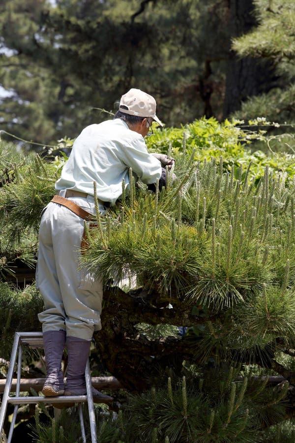 Poda profesional del jardinero un árbol foto de archivo