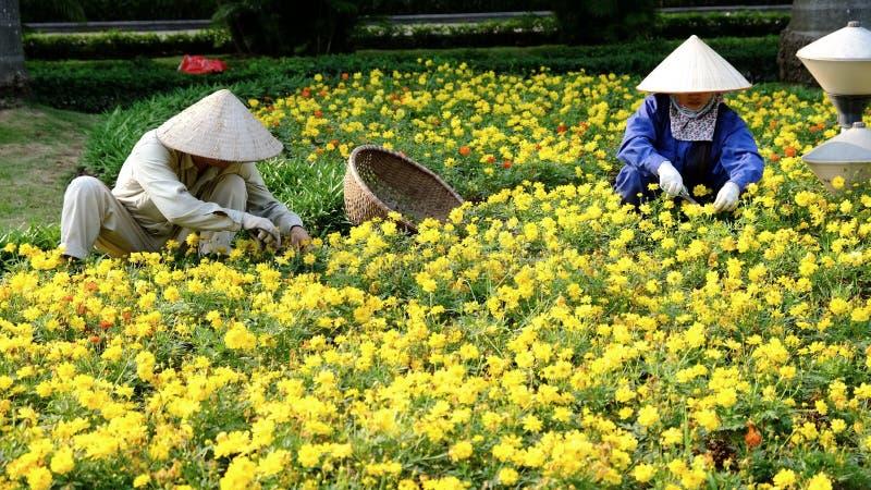 Poda vietnamita de los trabajadores una cama de flores en Hanoi, Vietnam imagenes de archivo
