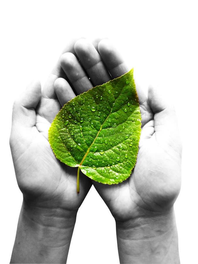 podaj zielone liści zdjęcie royalty free