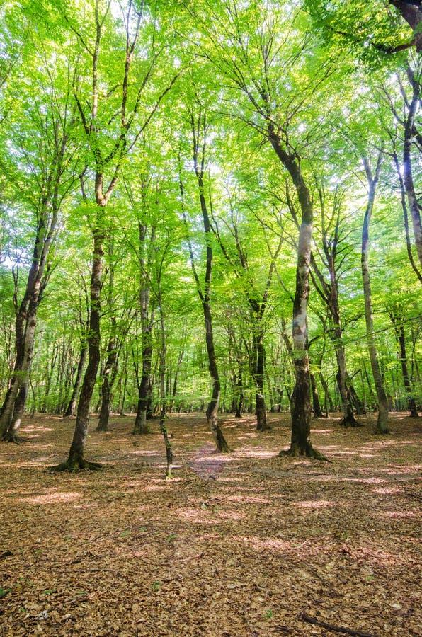 Podczas jaskrawy dzień zielony las fotografia royalty free