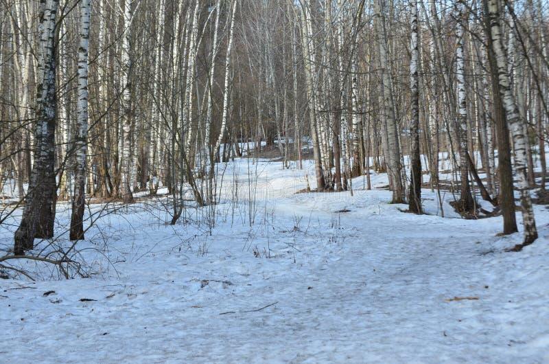 Podejście wiosna w drewnach zdjęcia royalty free