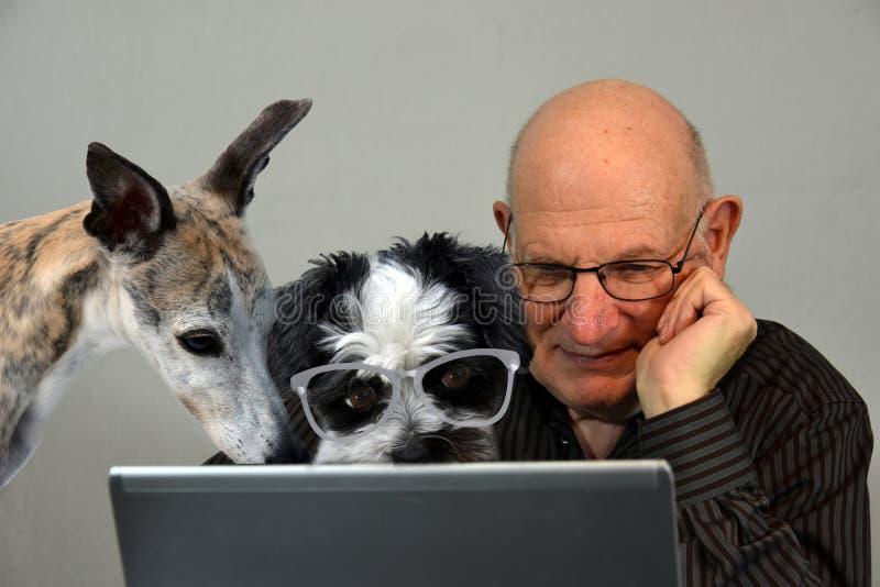 Podemos nós ajudá-lo? Cães e homem que trabalham junto, formando um chá imagens de stock
