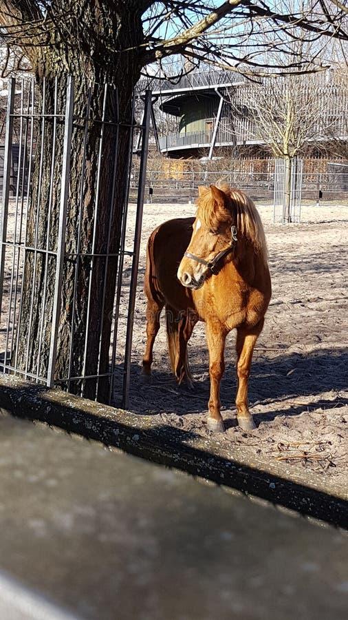 Poder Brown do parque do cavalo imagens de stock royalty free