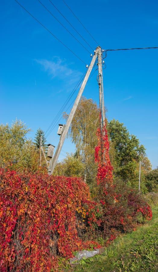 Poder de alta tensão dos apoios de madeira com a caixa de assentamento no fundo do céu azul Indústria elétrica Fundo do outono fotografia de stock royalty free