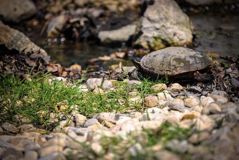 Poder de la tortuga foto de archivo