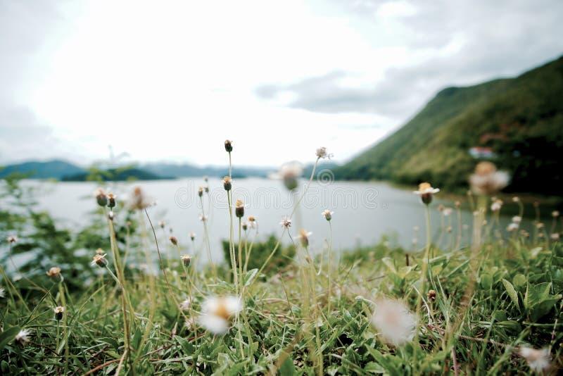 Poder de las hierbas de la flor foto de archivo