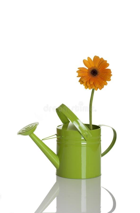 Poder de riego con una flor imagenes de archivo
