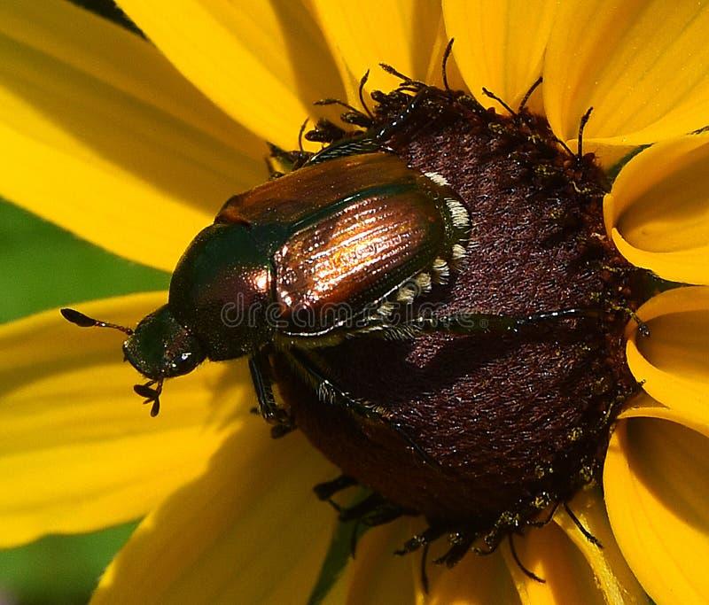 Poder del escarabajo imagen de archivo