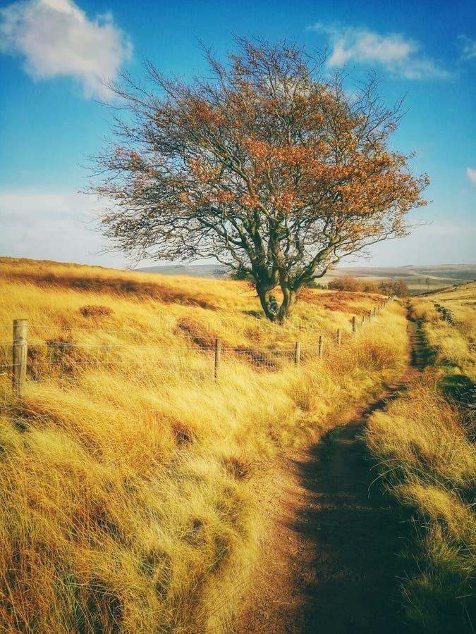 Poder del otoño fotografía de archivo libre de regalías