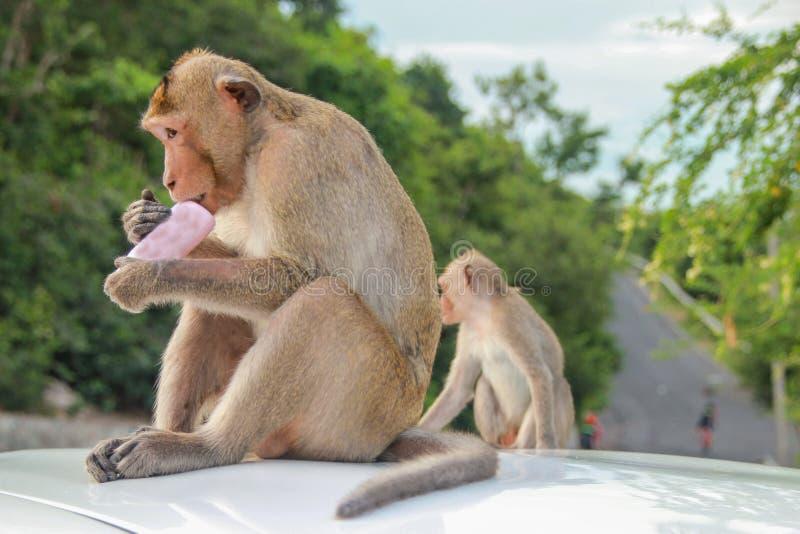 Poder que muerde del mono fotos de archivo libres de regalías
