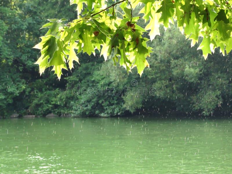 Podeszczowa prysznic w central park obraz royalty free