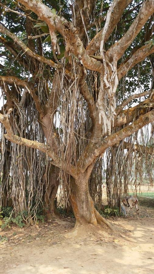 Podeszczowy drzewo zdjęcia royalty free
