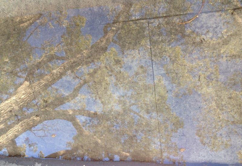 Podeszczowy kałuży odbicia drzewo zdjęcia royalty free