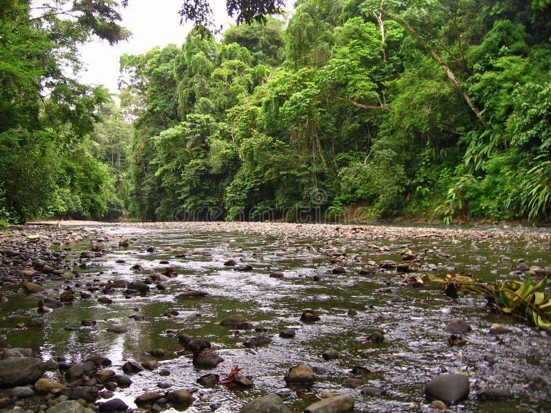 podeszczowy lasu widok fotografia royalty free