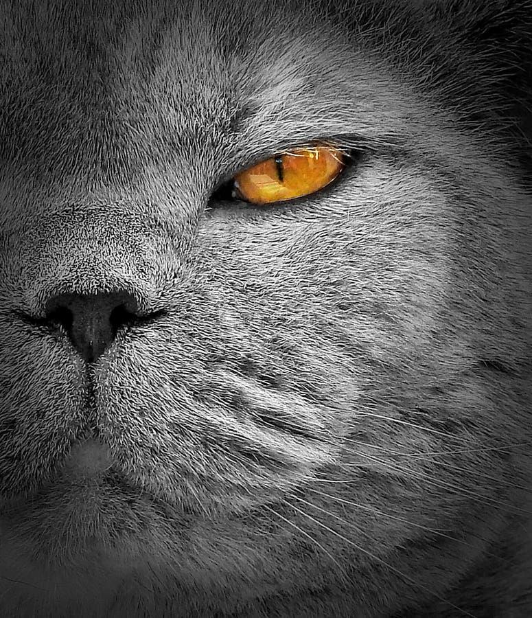 Podglądający inwigilacja kotów oczu sposobu spojrzenie zdjęcia royalty free