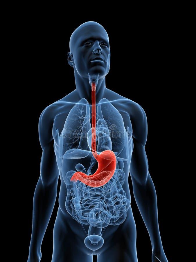 podkreślający żołądek ilustracja wektor