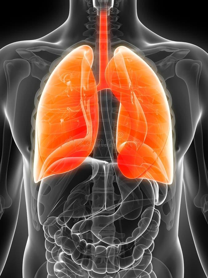 Download Podkreślający męski płuco ilustracji. Ilustracja złożonej z pomarańcze - 28962244