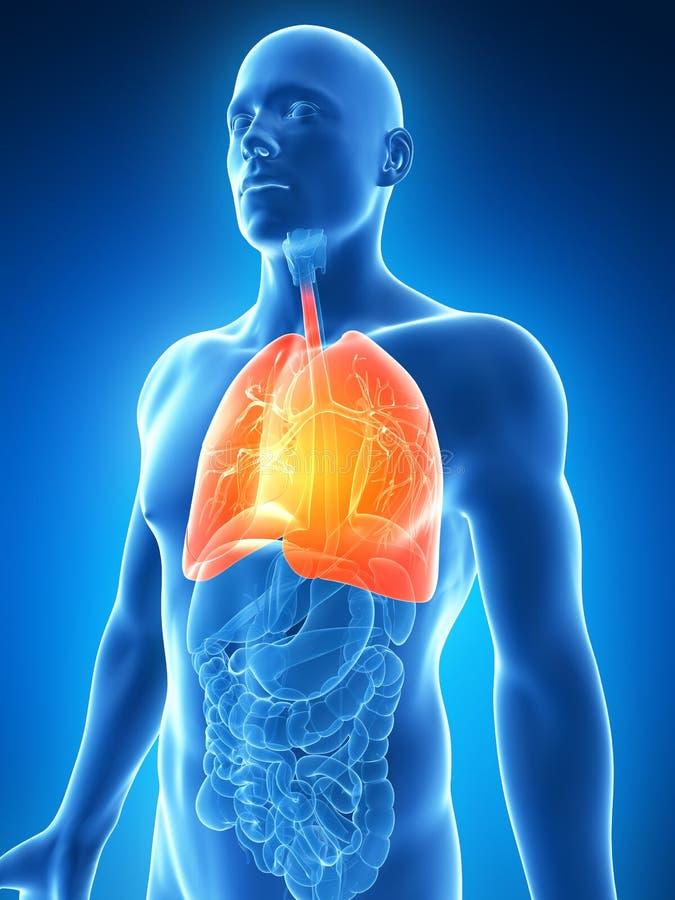 Download Podkreślający męski płuco ilustracji. Ilustracja złożonej z ciało - 28962369