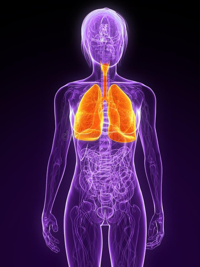 podkreślający płuco ilustracja wektor
