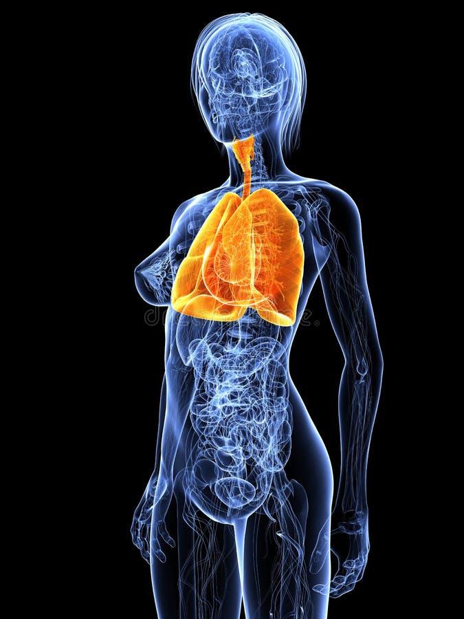 podkreślający płuco royalty ilustracja