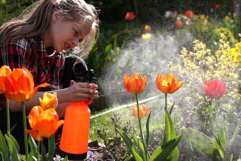 Download Podlewanie, Kwiatu Ogród - Piękni Dziewczyny Podlewania Tulipany Zdjęcie Stock - Obraz złożonej z 1, ogród: 53784452