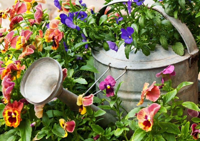 Podlewanie puszka otaczająca kwiatami fotografia stock