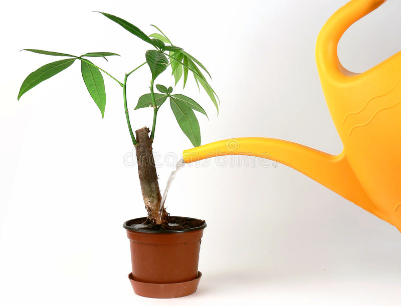 podlewanie roślin zdjęcie stock